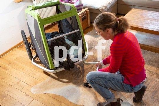 Schritt 5: Rollen im Wohnraum. Hierzu wird die Deichsel am Anhänger befestigt. Zunächst sollten einige Kippübungen mit dem Hund im Anhänger gemacht werden. Je besser das klappt, umso eher kann man die Übung mit vorsichtigem Rollen im Wohnraum kombinieren.