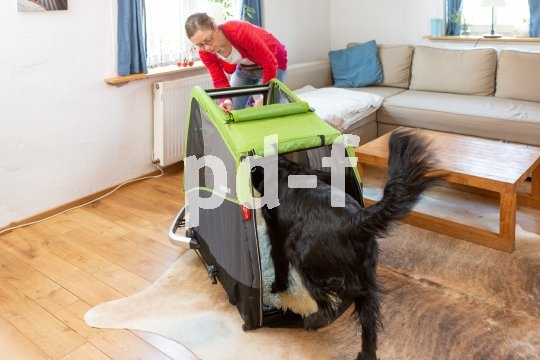 Schritt 2: Tunnelübung. Hierbei wird der Hund mittels Leckerli durch den Anhänger hindurch gelockt. Die Übung kann erweitert werden, indem der Anhänger zum Findeplatz für das Lieblingsspielzeug wird.