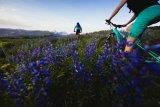 """Cross-Country-Mountainbikes wie etwa das """"Trail"""" von Cannondale bieten gutes Handling bei entspannter Sitz- und Lenkposition. Damit sind auch längere Touren auf wechselnden Untergründen ein Genuss."""